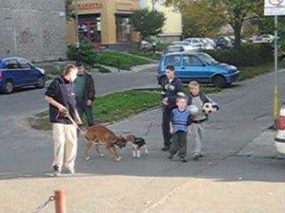 Image Result For Dog Training Punishment